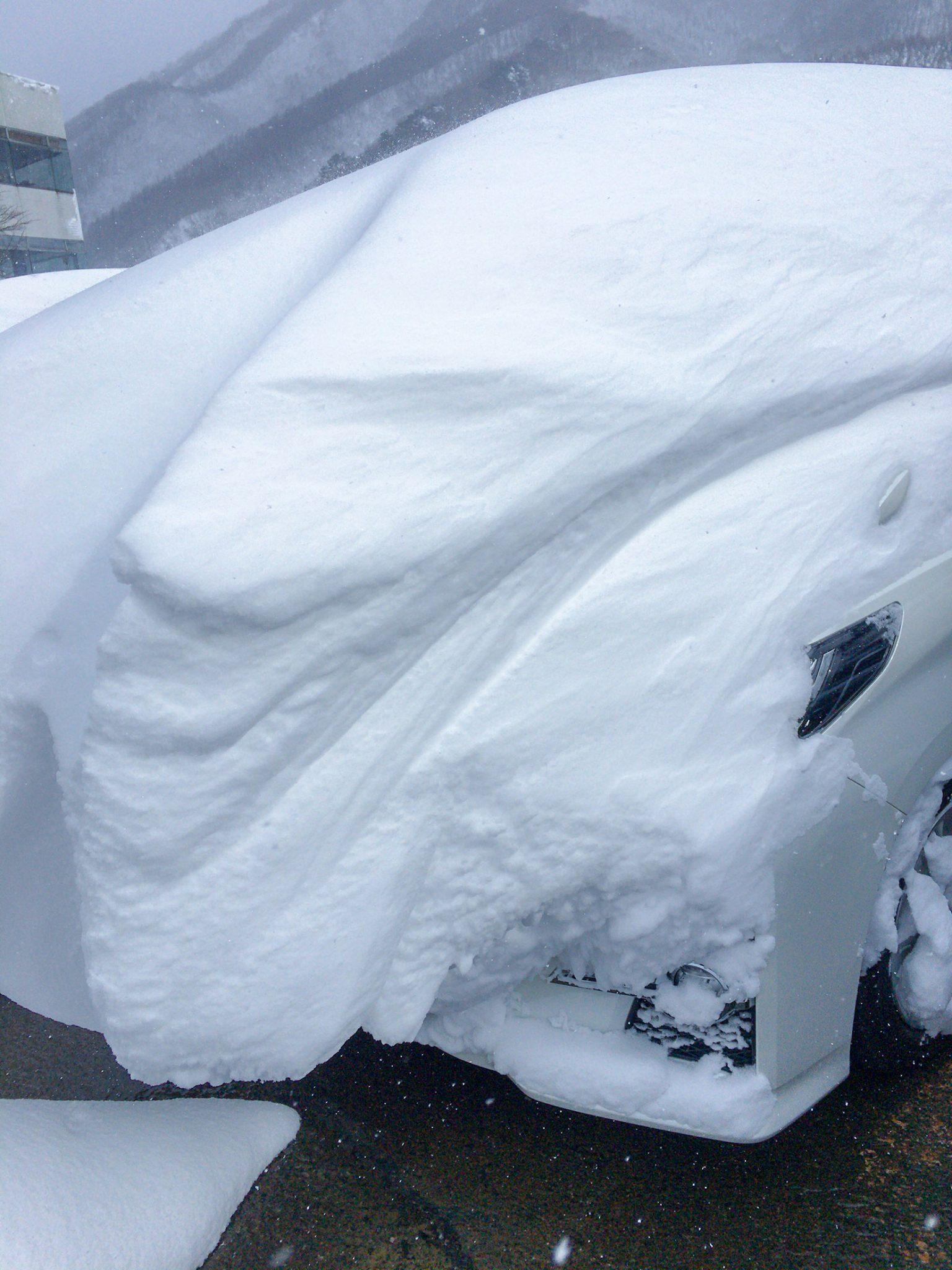 降り積もった雪の様子